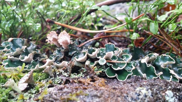 more lichen.jpg