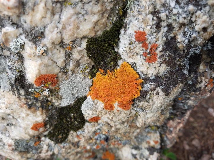 rusty lichen (1).jpg